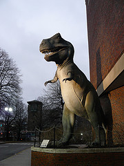 The T. Rex stationed outside the Boston Museum of Science stands upright on his back legs. Pretty stocky guy too.