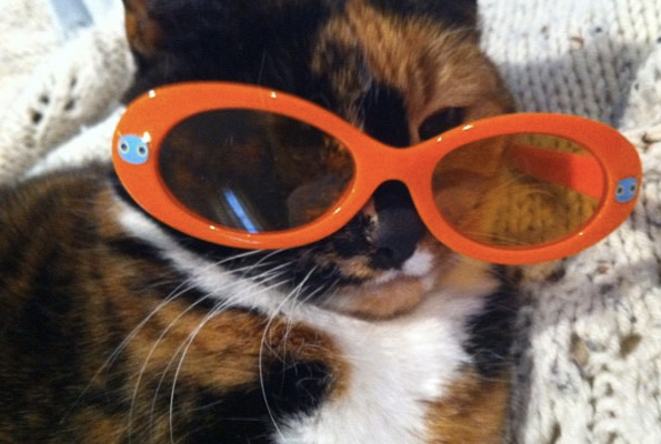 Mulberry wearing the orange glasses my daughter put on her.