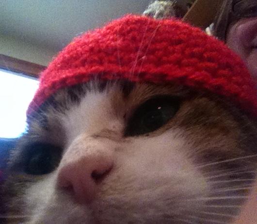 Can My Cat Allergies Go Away