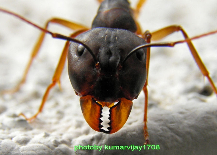 Photo: Kumarvijay1708 via DeviantArt. He has quite a collection of nature photographs over there.