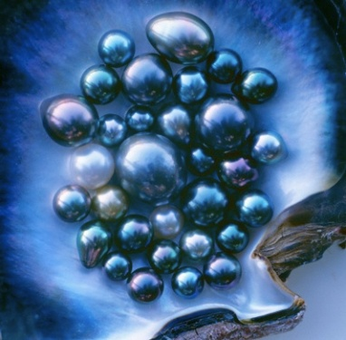 A cluster of blue, green, silver, peacock, grey, and pistachio Tahitian pearls cradled in a deep blue shell.