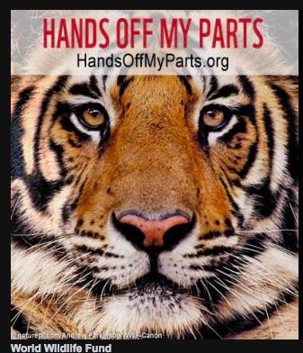 Photo: World Wildlife Fund
