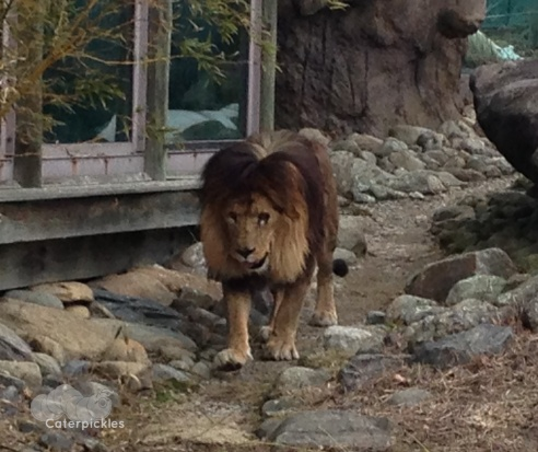Christopher Lion comes to get a better look at us. (Photo: Shala Howell)
