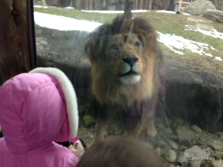 The Five-Year-Old and Christopher Lion have a conversation. (Photo: Shala Howell)