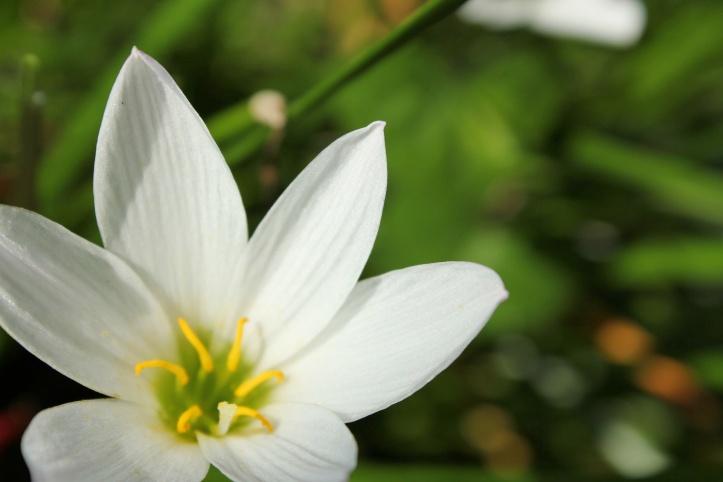 White Flower (Photo: Maliz Ong)