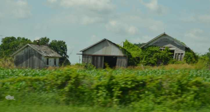 Another classic example of Ohio's Organic Reclamation Policy. When the old barn's done, build a new one next to it, and let time, gravity, vegetation, or the odd windstorm take the old one down for you. (Photo: Shala Howell)