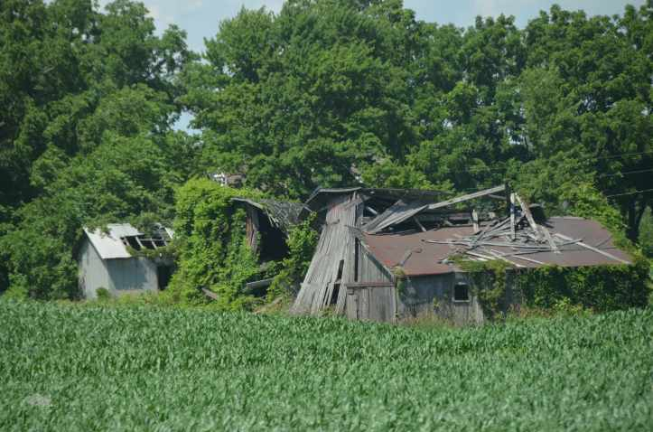 At first I thought this was storm damage, but then I took a closer look at the two structures in the back, and realized this was Organic Reclamation in action. (Photo: Shala Howell)
