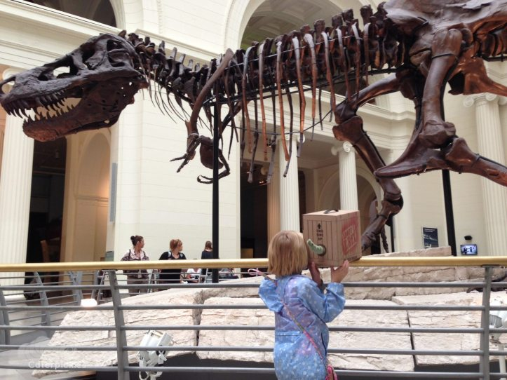 As a member of the family, The Six-Year-Old has decreed that her new T. Rex must adhere to the No Faces on Caterpickles rule. (Photo: Shala Howell)