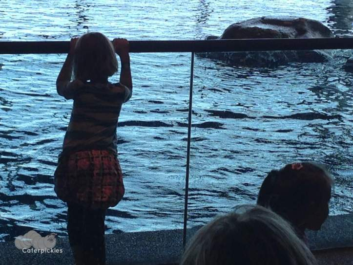 The Six-Year-Old watches the dolphins play at the Shedd Aquarium. (Photo: Shala Howell)