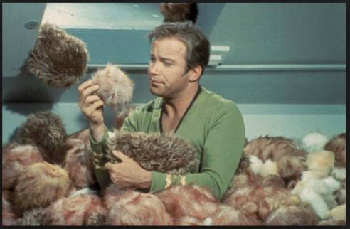 Still from the Star Trek episode, The Trouble with Tribbles. (Image via Pollyanna Rainbow Sunshine and the Needles of Doom, aka Best Blog Title Ever.)