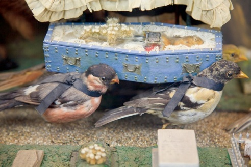 Closeup of the pall bearers in the Death & Burial of Cock Robin. (Photo via Walter Potter Taxidermy)