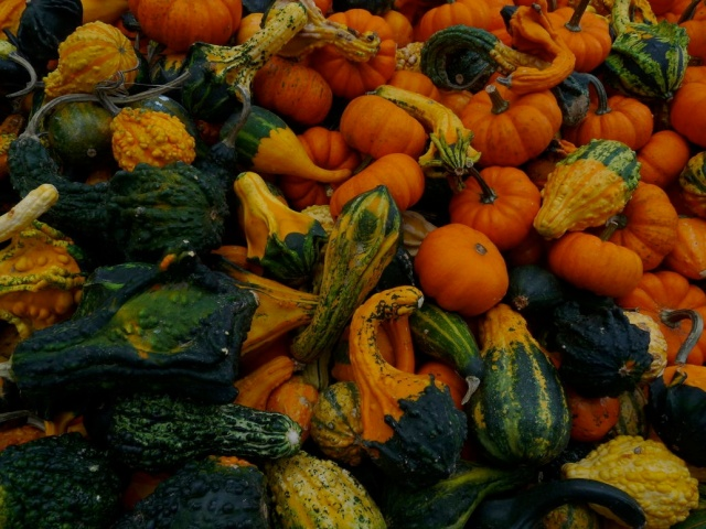 Gourds (Photo: Deviant Art Public Domain Pics)