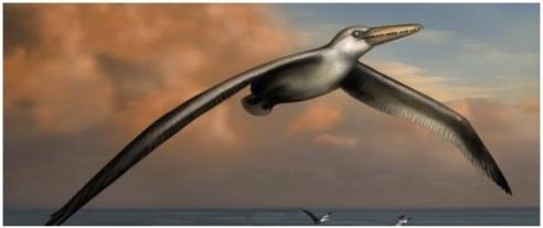 Artist's illustration of the Pelagornis sanderski, the world's largest ever flying bird. (Image: Liz Bradford, Bruce Museum)