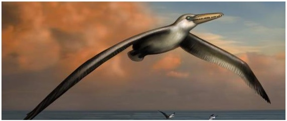 Artist's illustration of the Pelagornis sanderski, the world's largest ever flying bird. (Image: Liz Bradford, Bruce Museum)