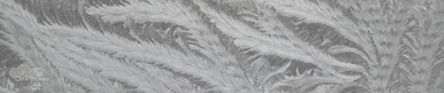 cropped-frostfeb2-smaller.jpg
