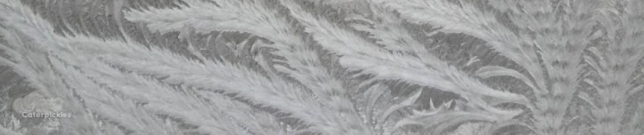 cropped-frostfeb2-smaller.jpg