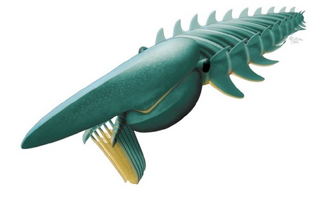 Artist's rendering of the 2 meter-long filter-feeder Aegirocassis benmoulae. This giant sea creature lived in Morocco about 480 million years ago during the Early Ordovician. (Artist rendering: Marianne Collins)