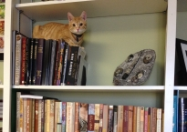 An orange tabby sits on a shelf of black books. Below him is another shelf with books with covers in varying shades of brown.