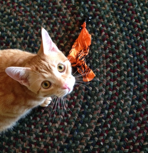An orange cat looks up at the camera with a guilty expression on his face. Below his paw is a newly popped orange balloon. His fur is in the same color family as the balloon, but definitely lighter.