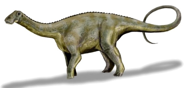Nigersaurus taqueti, a sauropod from the Middle Cretaceous period. Art by Nobu Tamura, based on a description by Sereno et al., 2007.