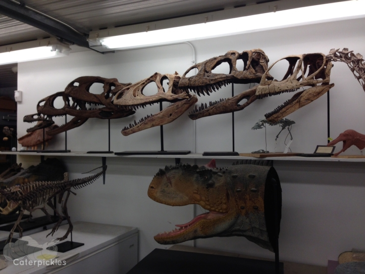 The wall of skulls in the upstairs portion of the Fossil Lab (Photo: Shala Howell)
