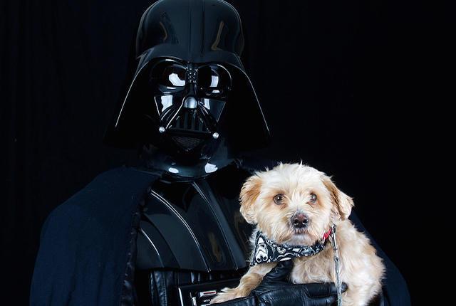 Photo: Rohit Saxena for Ottawa Humane Society