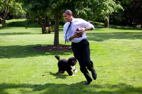 Barack Obama on the lawn playing football with Bo.