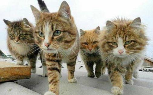 A kindle of kittens on the prowl. (Photo via PetSafe Brand @PetSafe)