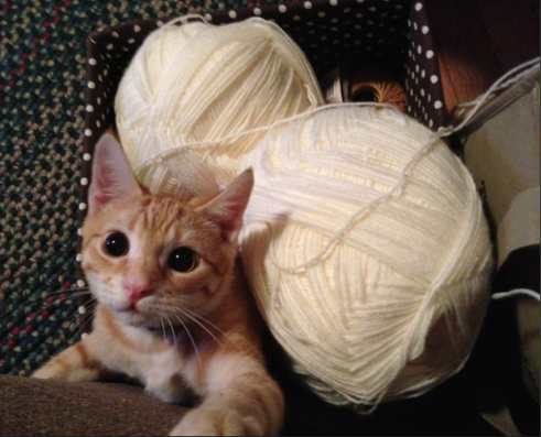 An orange kitten -- a very young Canelo -- in a basket of cream-colored yarn. He's clearly darker than the yarn.