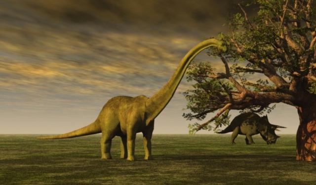 Brontosaurus (Image credit: Pixabay)