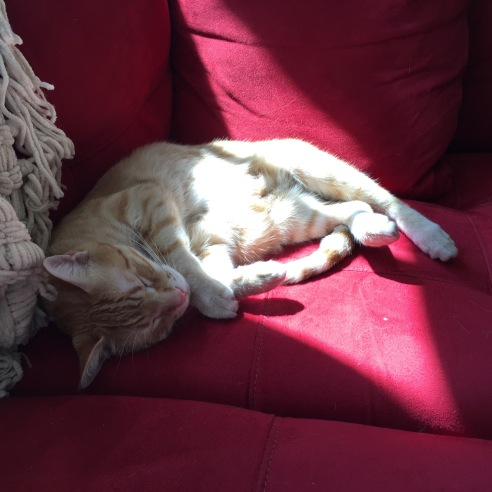 Same orange cat, completely asleep.