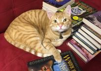 An orange tabby sits on a red couch, surrounded by a large number of Warriors books. His paw is on the one with a portrait of an orange tabby on the cover (Secrets of the Clans).