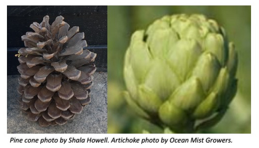 On the left side is a photo of a pine cone. On the right is an artichoke.