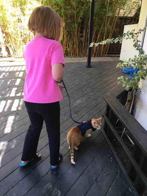 my daughter takes our orange tabby cat out onto our back deck. The cat is fully harnessed up and on a leash.