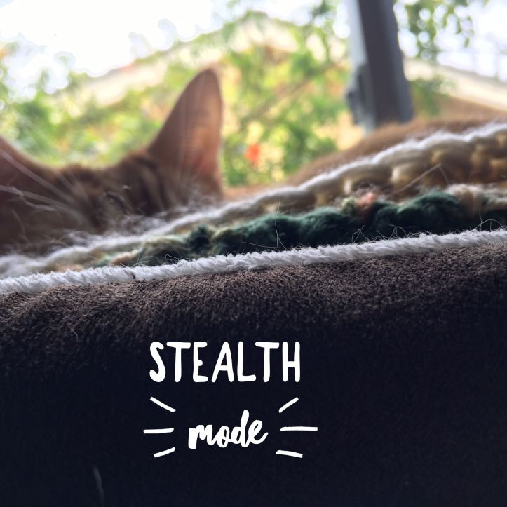 Image of cat sleeping in brown cat bed from the side, only the tips of his orange ears are visible. Captioned: Stealth Mode.