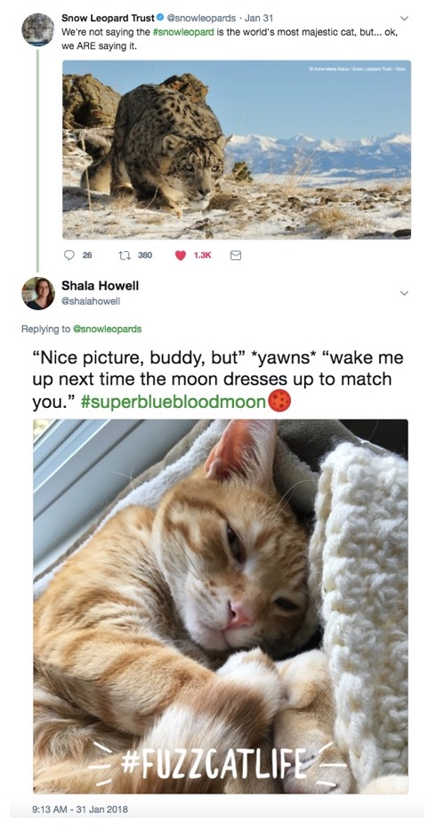 "Top tweet from @snowleopards is a photo of a snow leopard surveying a snowy mountainous landscape. Text for it reads ""We aren't saying the snow leopard is the world's most majestic cat, but ok we are saying it."" Bottom tweet from @shalahowell is of a ginger cat sleeping in a cat bed looking unimpressed. Text reads ""Nice picture, buddy, but"" *yawns* ""wake me up next time the moon dresses up to match you."""
