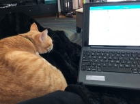 "orange tabby ""sharing"" a lap with an iPad in a keyboard case."