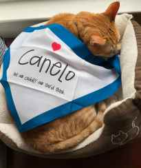An orange cat sleeps in a cat bed by a window. A white bandana bordered in blue is draped over him like a blanket.