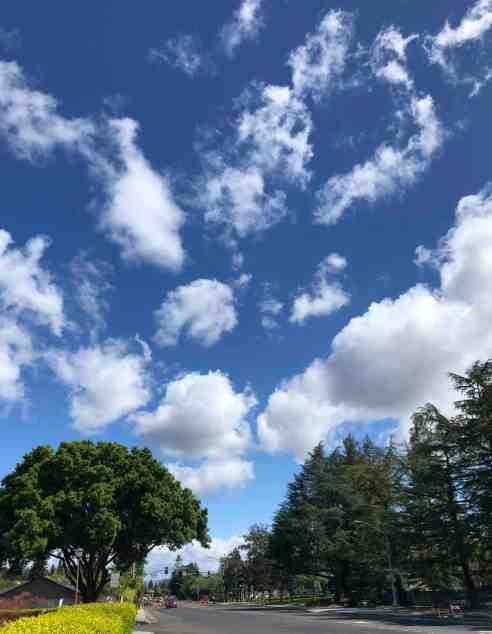 Deep blue sky dotted with fluffy white clouds fading to a baby blue sky just above the treeline.