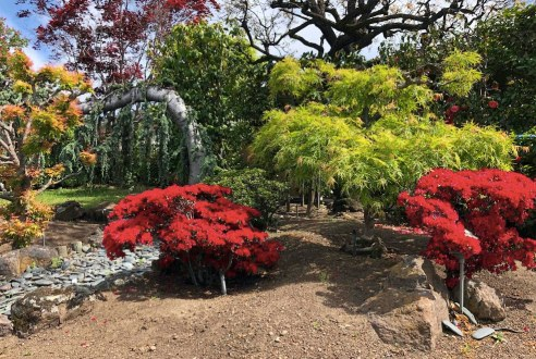 The garden scene shows several short bushes with bright red leaves, a faux riverbed made of smooth grey river stones, and of course trees with curvy branches and lots of character. All planted in dirt. Not a speck of grass anywhere.