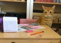 Orange cat sits at my daughter's desk. He's staring at it with one ear twitched.