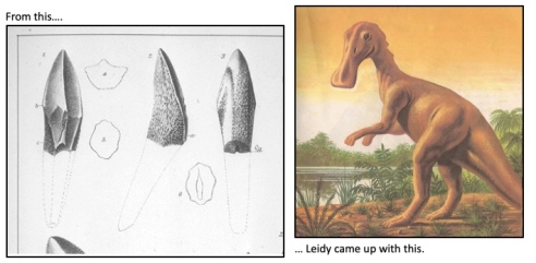 Left: Black and white sketch of three teeth. Right: Painting of a duck-billed dinosaur standing by a pool of water. Brown and green tones.