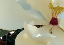 Cropped photo zooming in on a slice of a magnolia flower in bloom.