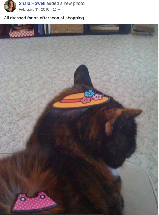 Close-up of the head and shoulders of a calico cat. On her head is a flat orange plastic hat with pastel flowers, on her shoulders is a polka-dot shirt.