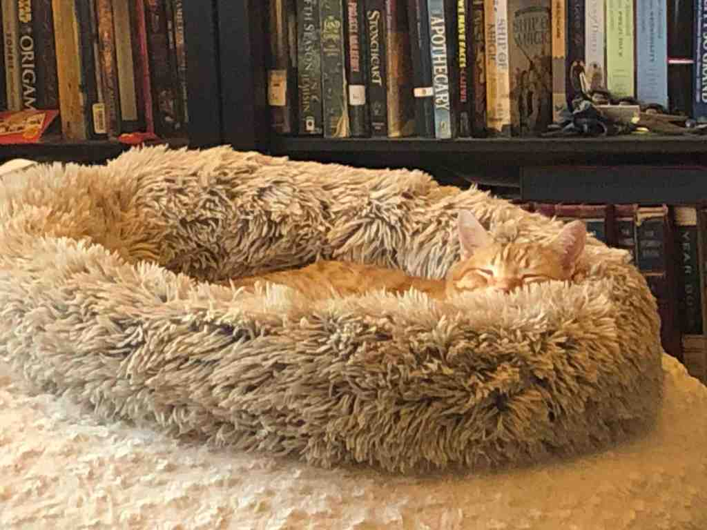 Cat sleeping contentedly in a furry cat bed in front of a bookshelf full of books.