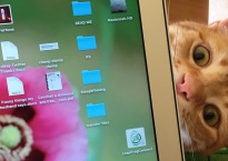 Cat peeks out from behind a laptop.
