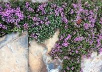 small purple flowers on stone paving