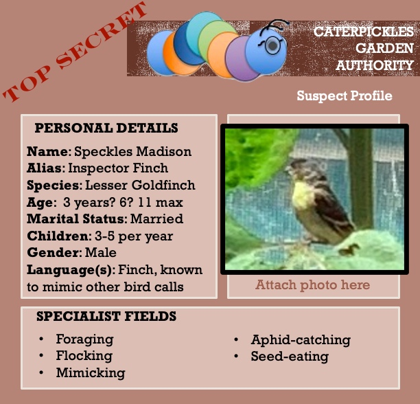 Image shows a mock-up of a suspect profile from the Caterpickles Garden Authority. Stamped TOP SECRET, the profile features a close-up of a grainy photo of a lesser goldfinch sitting in a sunflower plant, and has a list of personal details (name Speckles Madison, alias Inspector Finch, age (3 years? 6? 11 max), marital status married, children 3-5 per year, gender male; as well as a list of specialist fields: foraging, flocking, mimicking, aphid-catching, and seed-eating