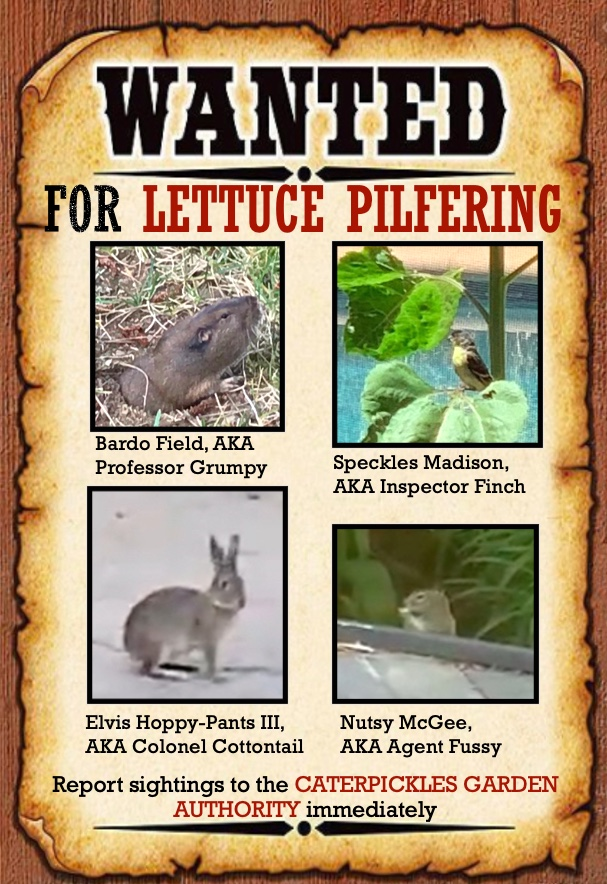 "Image of Wanted Poster which reads: ""Wanted for Lettuce Pilfering. Report any sightings to the Caterpickles Garden Authority immediately."" It contains four photos: a gopher named Bardo Field, AKA Professor Grumpy; a Goldfinch named Speckles Madison, AKA Inspector Finch; a rabbit, named Elvis Hoppy-Pants III, AKA Colonel Cottontail; and a squirrel named Nutsy McGee, AKA Agent Fussy."