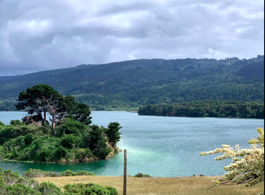 Scene beside a a lake in Northern California. Green hills in the background. Foreground has a white flowering bush, golden grass, and a little tree-covered island in the midst of a lake of blue-green water.